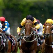 Horse Betting Profits